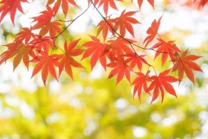 万葉のさと 横浜 季節のイベント